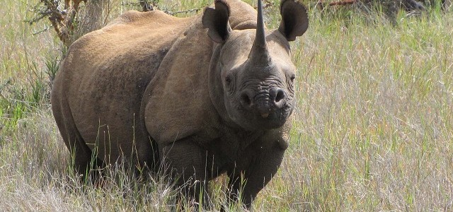 17 WAYS TO END MASS POACHING IN KENYA