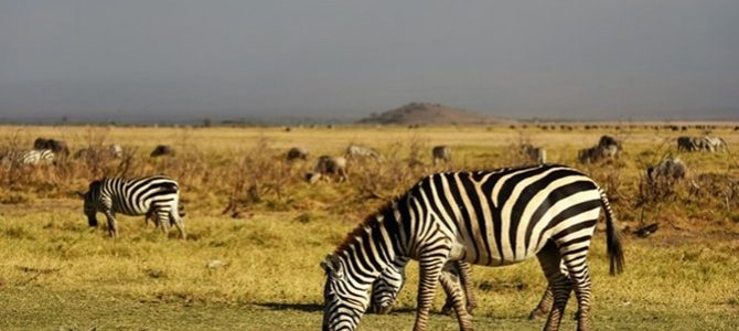 Drought in Kenya a threat to wildlife