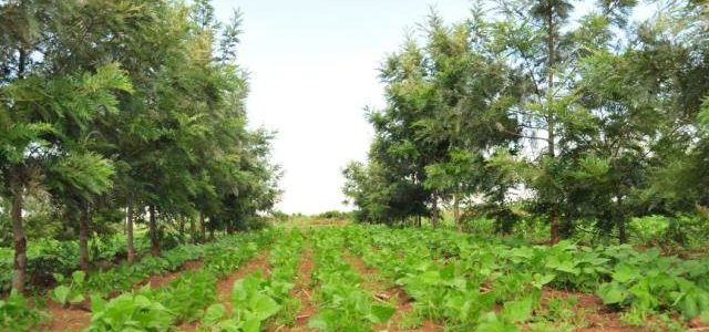 Agroforestry ,Food security and wildlife conservation