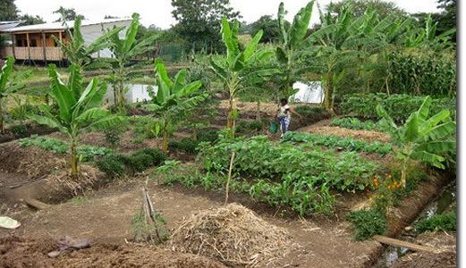 IS PERMACULTURE THE FUTURE OF CONSERVATION?